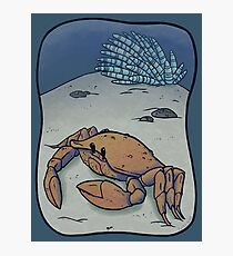 Crab Photographic Print