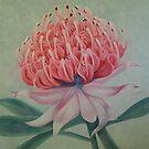 Pink Waratah by lukekellyart