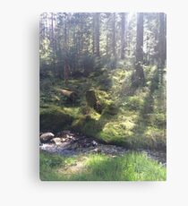 Light on the Forest Floor, Achray Forest Metal Print