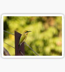 Rainbow Bee-eater Sticker
