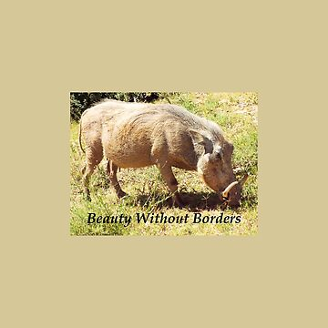 Beauty Without Borders Warthog Grazing by ccnnddrr55