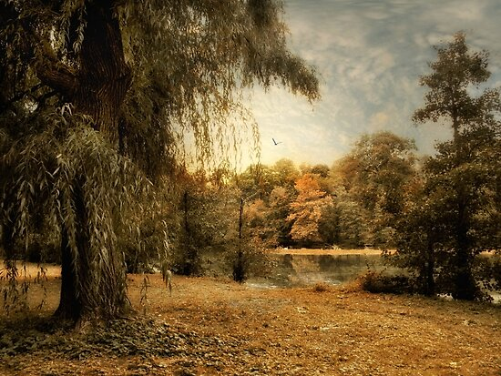 Weeping Willow by Jessica Jenney