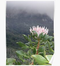 Kirstenbosch- South Africa Poster