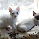 Walt and Henry as Kittens by montecore827