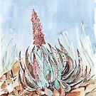 Aloe Peglerae von Maree Clarkson