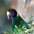 Birds Eye View by outsider