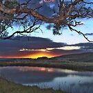 Dam-Tree by Ben Mattner