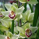 Orchids by jackitec