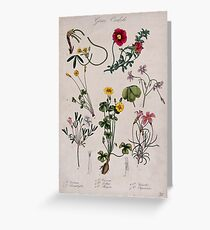 Seven flowering plants, all species of the genus Oxalis. Coloured lithograph. Greeting Card