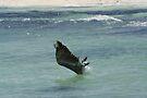 Fishing - Pelican Style by Allen Lucas