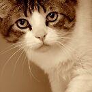 Feline Finesse by Susan McKenzie Bergstrom
