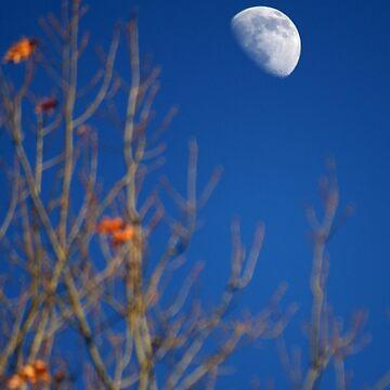 Moon by Geier