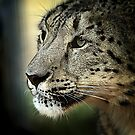 Magnificent Beast 2 by Manfred Belau