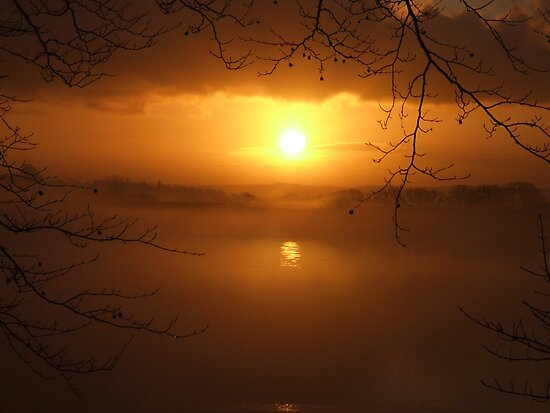 Golden Mist  by Paul Gibbons