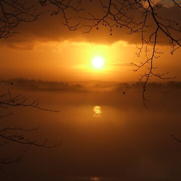 Golden Mist  by spottydog06