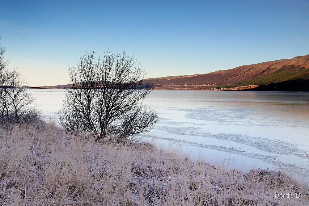 January 30. by Þórdis B.
