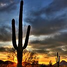 Desert Sunrise by Sue  Cullumber