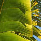 Sunshine leaf by Catherine Davis