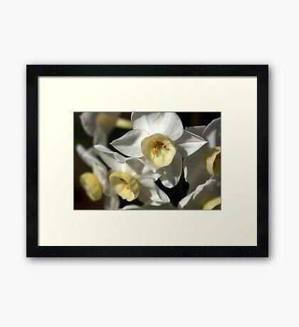 Kicking Back - Daffodils Framed Print