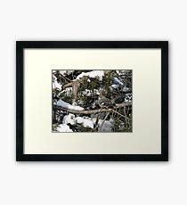 Northern mockingbird - Ottawa, Ontario Framed Print