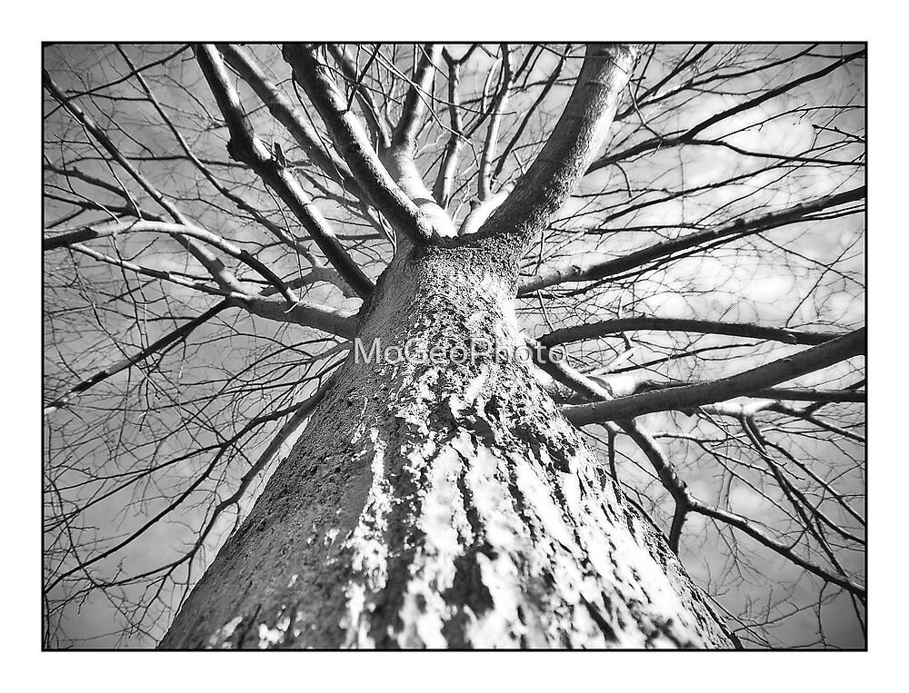 Tree - No.2 by MoGeoPhoto