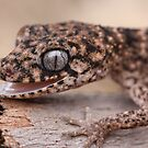 Granite Thick Tailed Gecko 2 by Steve Bullock