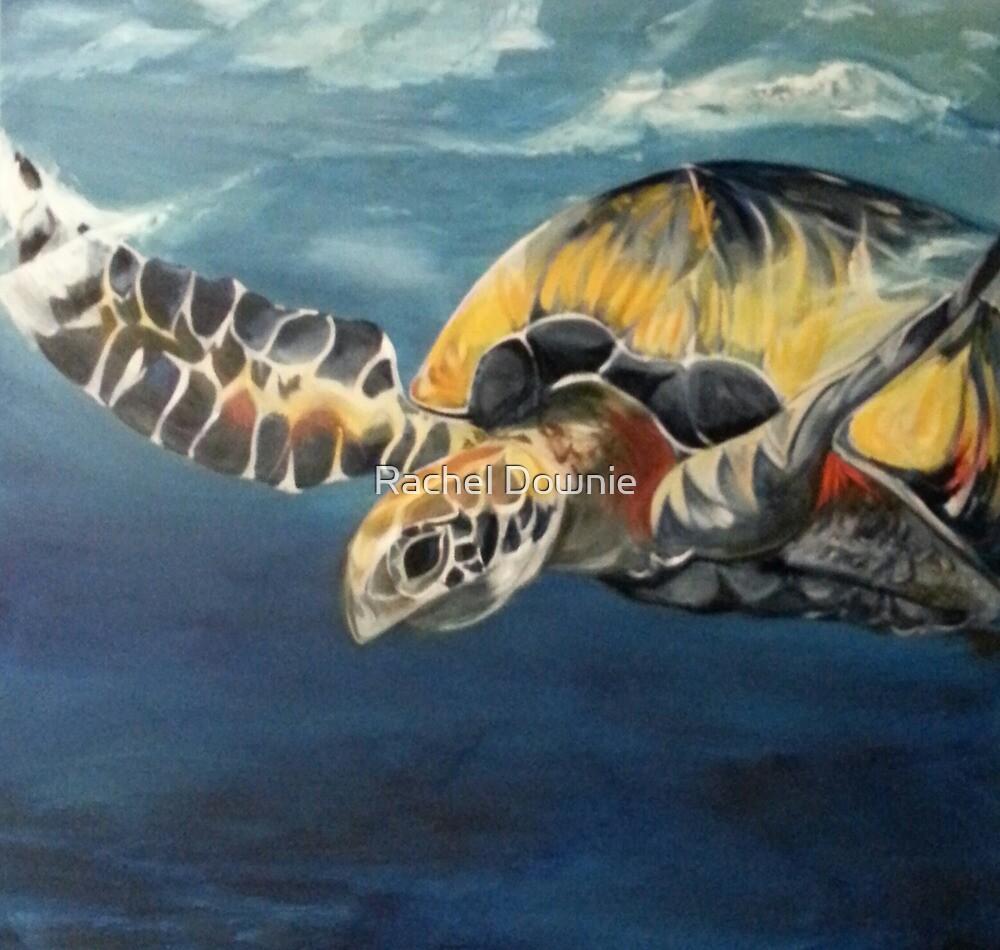 Holiday Turtle by Rachel Downie