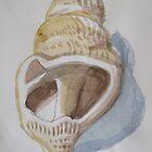Seashell in Watercolour by Roza Ganser