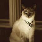 Angel Cat in Sepia by Charlotte Yealey