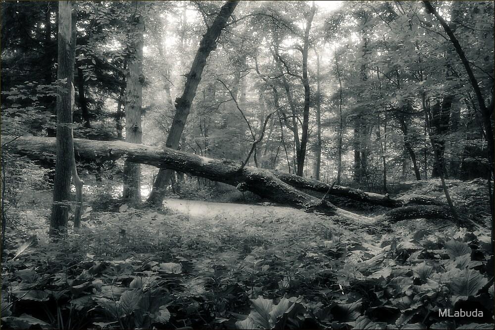 One of the Fallen Oak Openings Metro Park by MLabuda