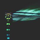dragonfly by Ingrid Beddoes