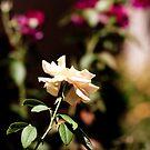 Rose by saidurrob