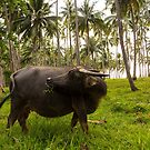 Elnido Water Buffalo (Carabao) by Bobby McLeod