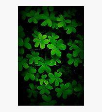 """Little Green"" Photographic Print"