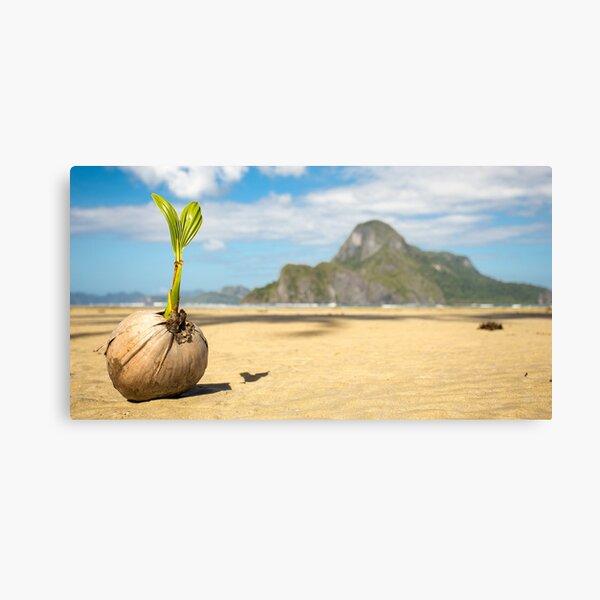 Coconut on the Beach, Elnido, Palawan, Philippines Canvas Print