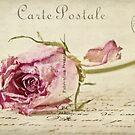 Rose Post Card by Evelyn Flint