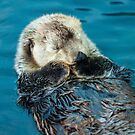 Otterly Bliss by Dave  Knowles