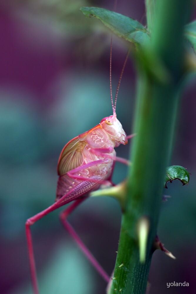 Resting on a Rose Thorn by yolanda
