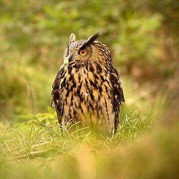 Eagle Owl by Femaleform
