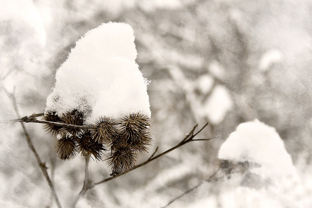 Thorns in the snow by Valentina Walker