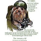 Yorkshire Terrier History by Douglas Rickard