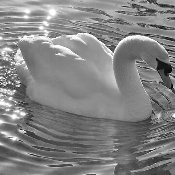 Swan by NaturesEarth