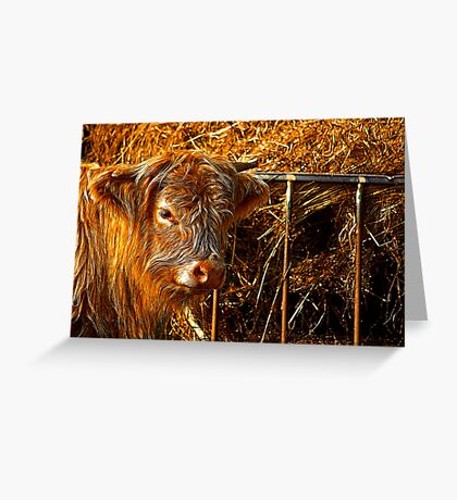 Highland Cow #1 Greeting Card