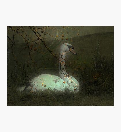 Silent Songs Photographic Print