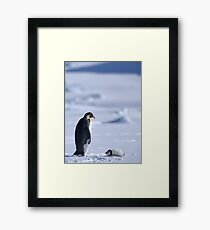Emperor Penguin and Chick - Snow Hill Island Framed Print