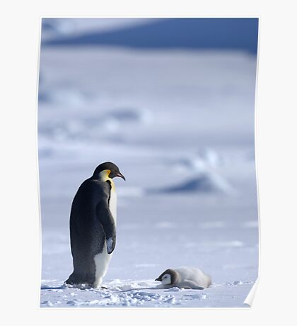 Emperor Penguin and Chick - Snow Hill Island Poster