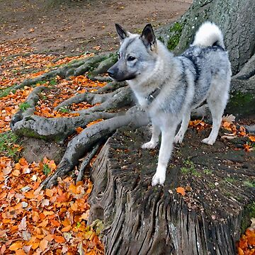 Elkhound In Autumn by CreativeEm