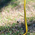 Sassy Snake by MyFrogCroaked