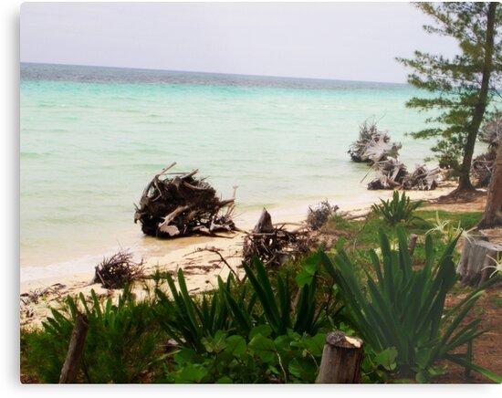 Island Paradise by Yajhayra Maria