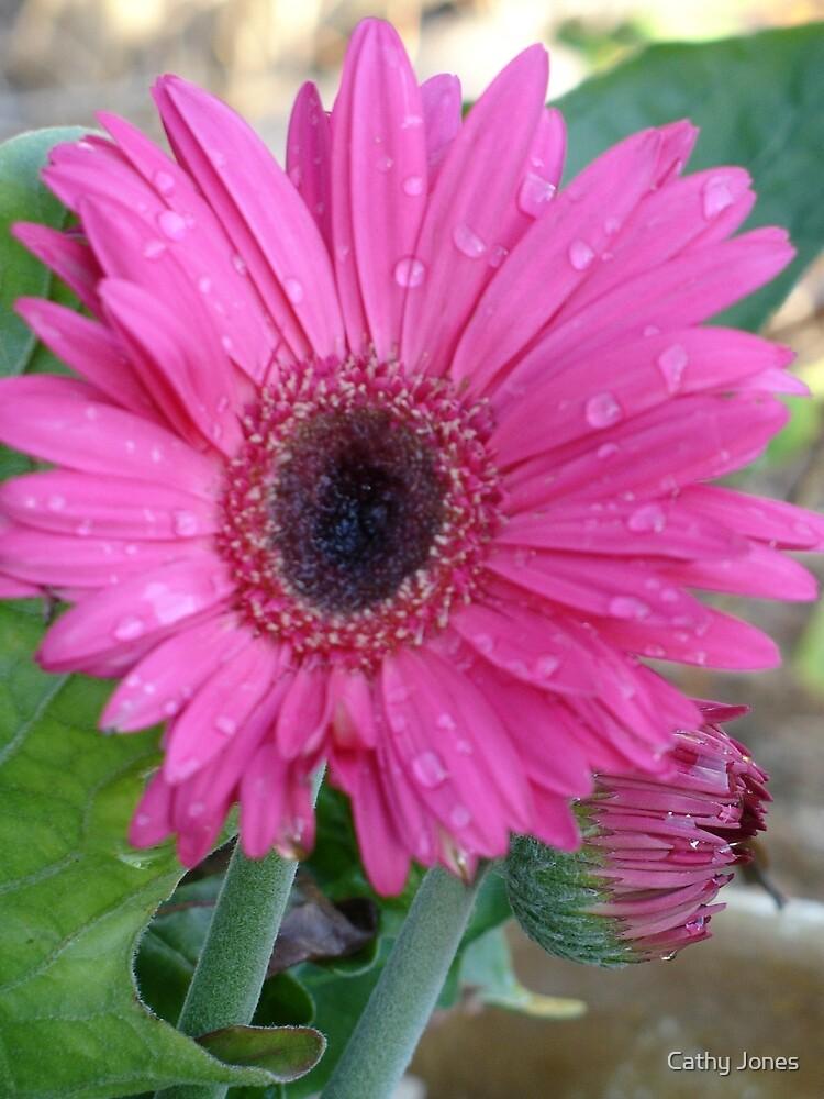 Gerber Daisy by Cathy Jones
